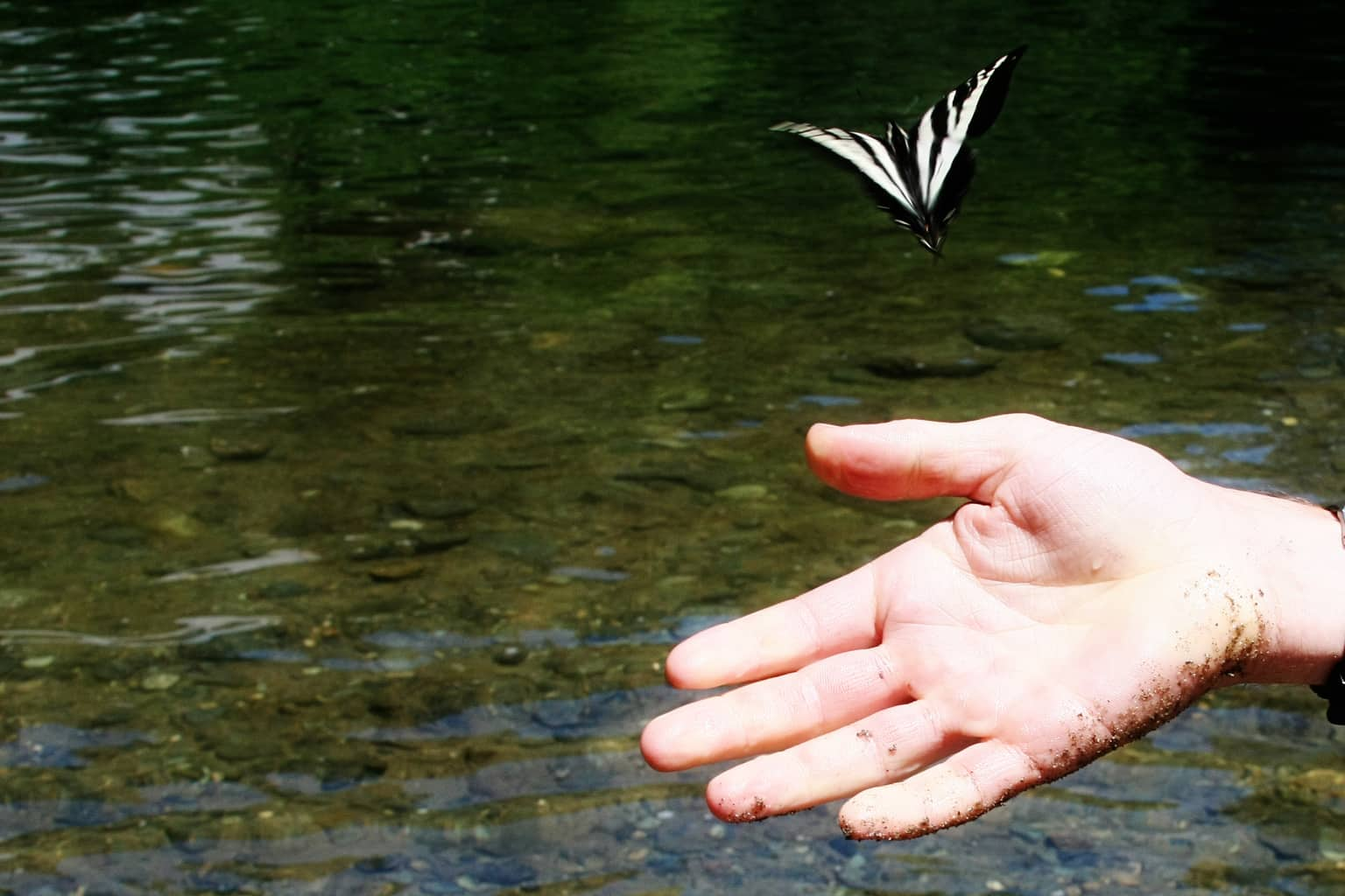 butterfly and hand