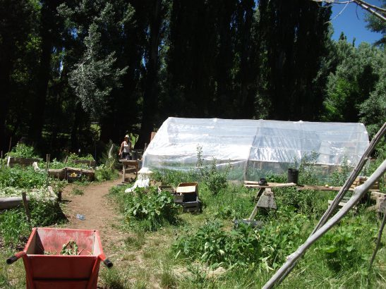 mini food forest abutting a plastic greenhouse