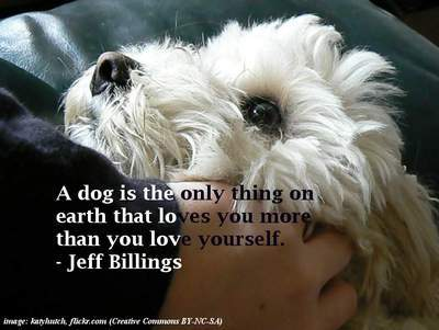 Dog - Unconditional love quotes