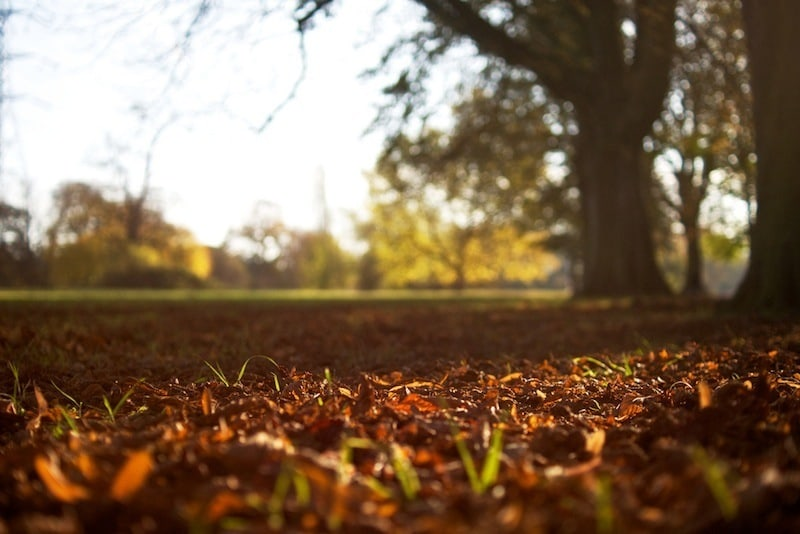 Autumn scene - Thoughts from a Master Gardener