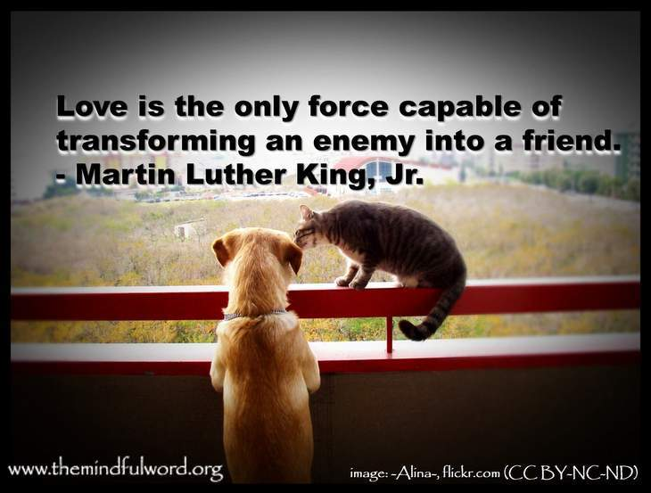 Dog and cat - Quotations about passionate love
