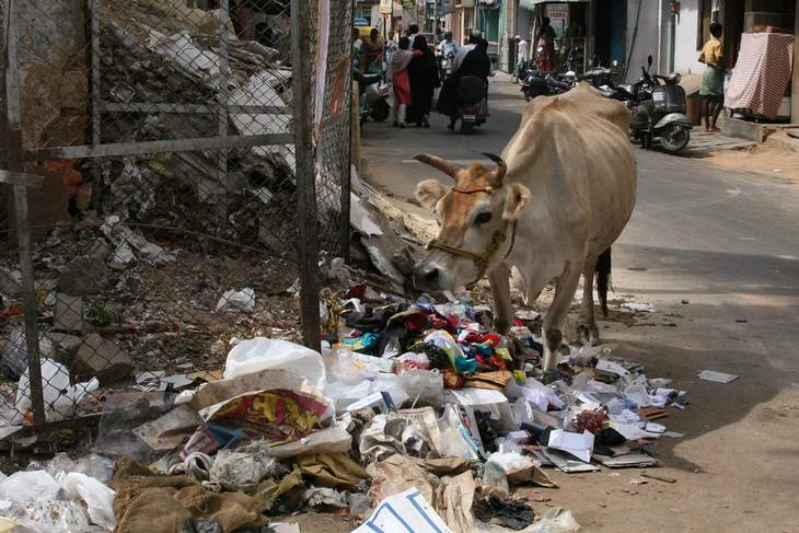 Cow with garbage - Video review of The Plastic Cow