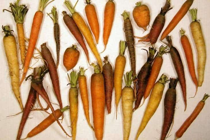 Group of carrots - Carrot/daikon drink recipe