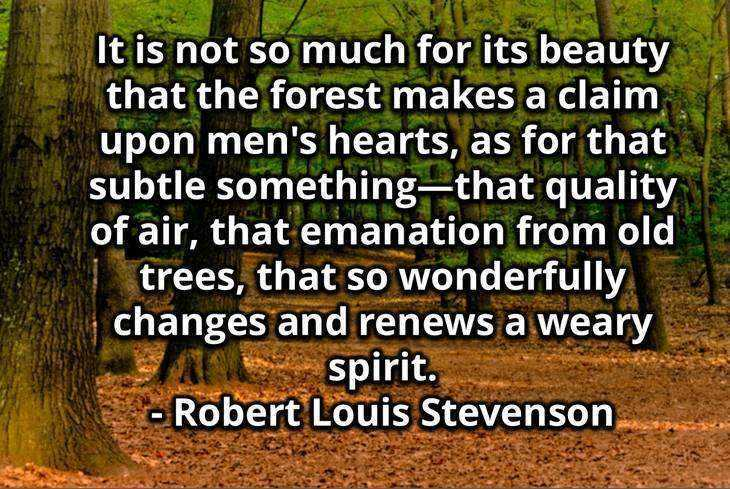 Forest - Quotes about the environment