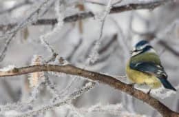 bird on frozen branch - live with less in winter