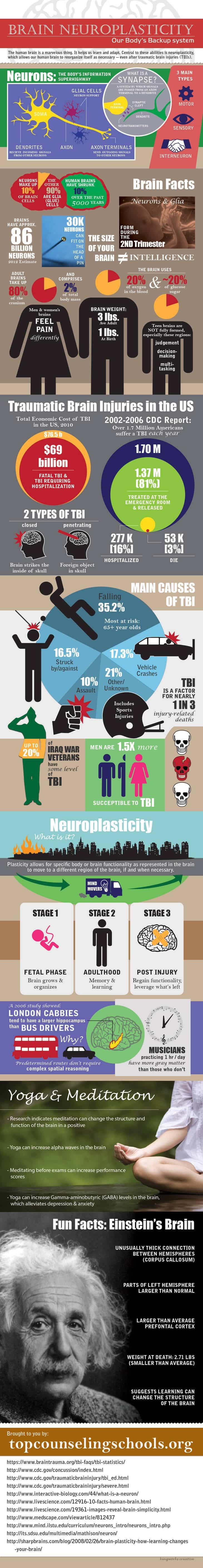 Infographic - Brain neuroplasticity infographic