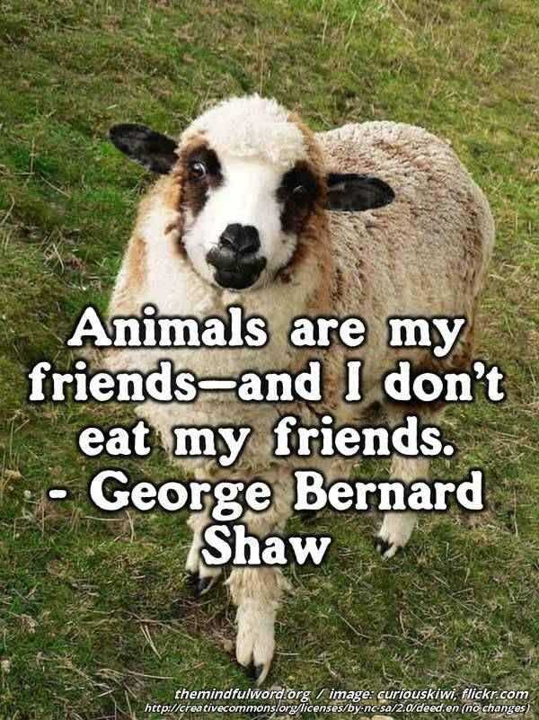 One sheep - Hippie quotes