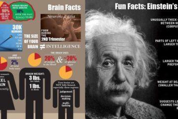 Landscape image - Brain neuroplasticity infographic