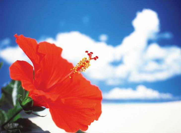 Red hibiscus flower and clouds - Kufre Udeme poetry