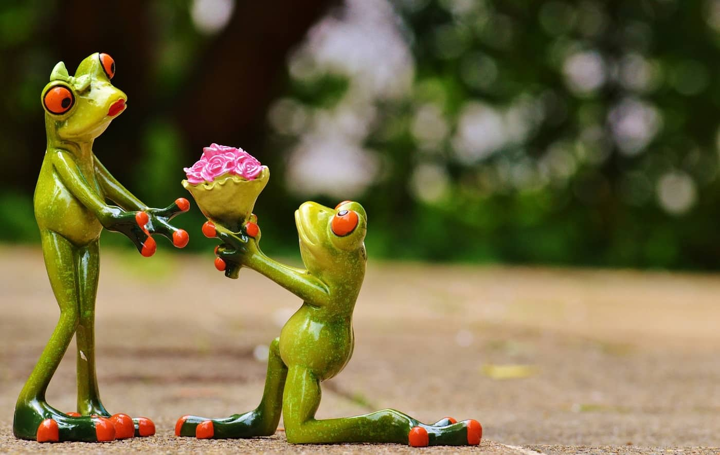 Frog giving another frog flowers - The joy of giving