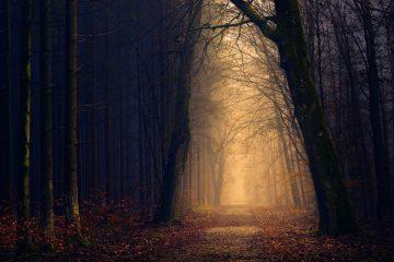 backlit dark dawn - always do your best