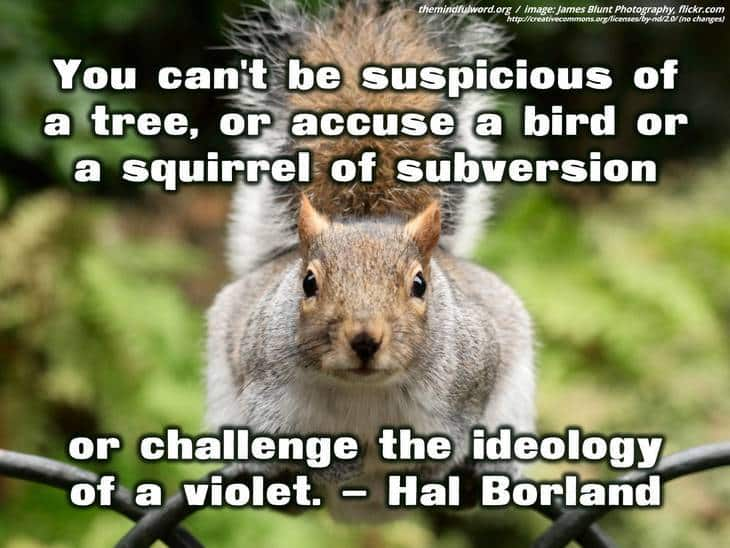 Squirrel on fence - Earth day quotes