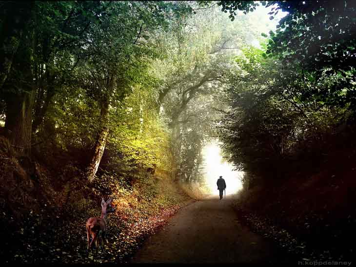 Man at peace walking in forest