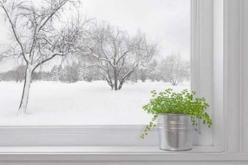 green plant in winter window - growing herb gardens over winter