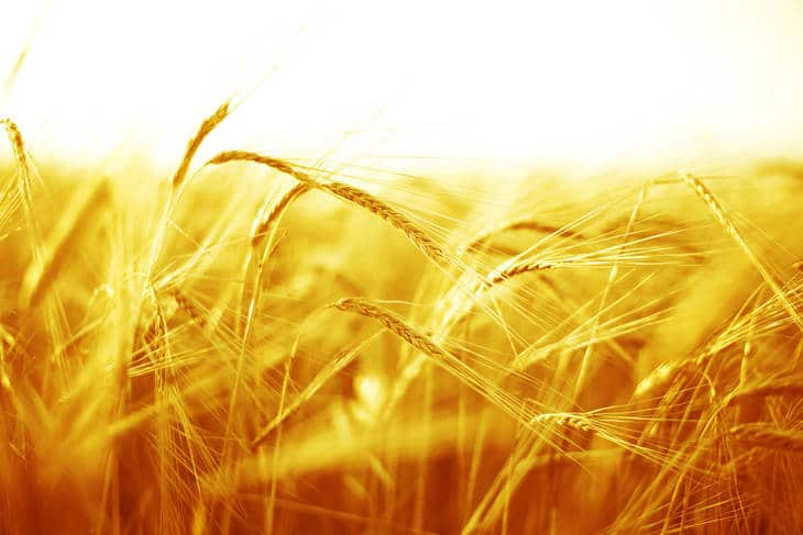 Yellow wheat field - Daily affirmations about prosperity