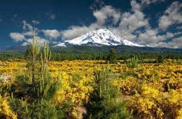 Mount Shasta - Transformative trip to Mount Shasta