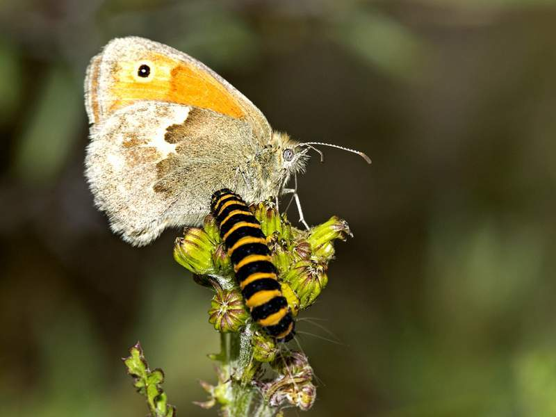 Caterpillar and butterfly on twig