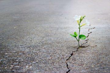 plant growing through crack