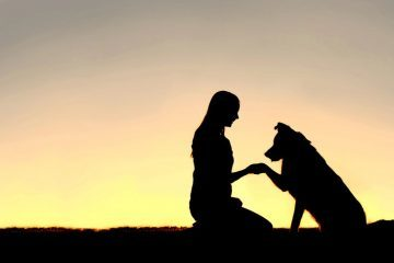 silhouette of woman and dog - nonhuman beings in human social services