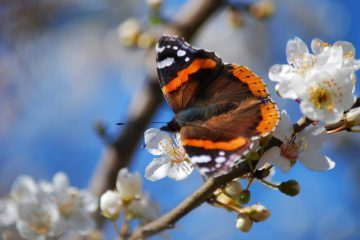 Monarch butterfly on branch - We all have wings fiction