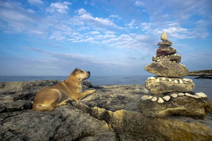 Dog on beach beside stack of stones - How to love mindfully