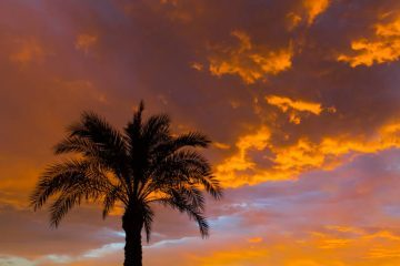Top of palm tree at sunset - Poems by Erika Goodrich