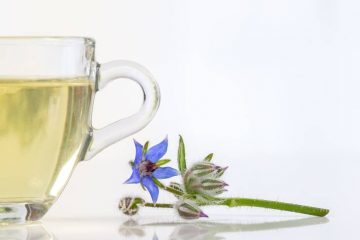 Borage tea with borage plant - Brew up a cup