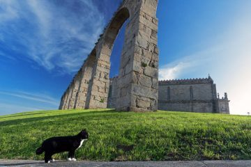 Black and white cat in front of monastery - Mirror Cat fiction story
