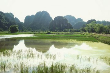 Landscape scene of limestone karsts reflected in ponds surrounding rice paddies