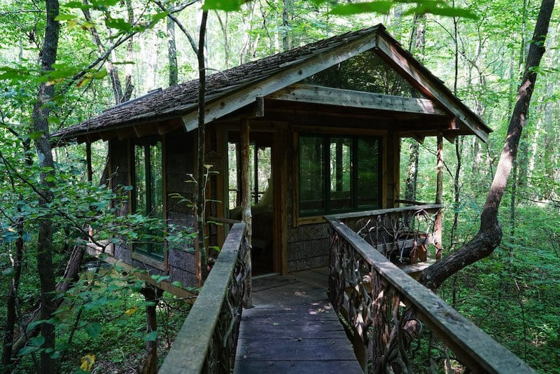 Treehouse in a forest