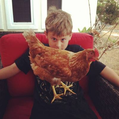 Child afraid of chicken on his lap - Confronting reality