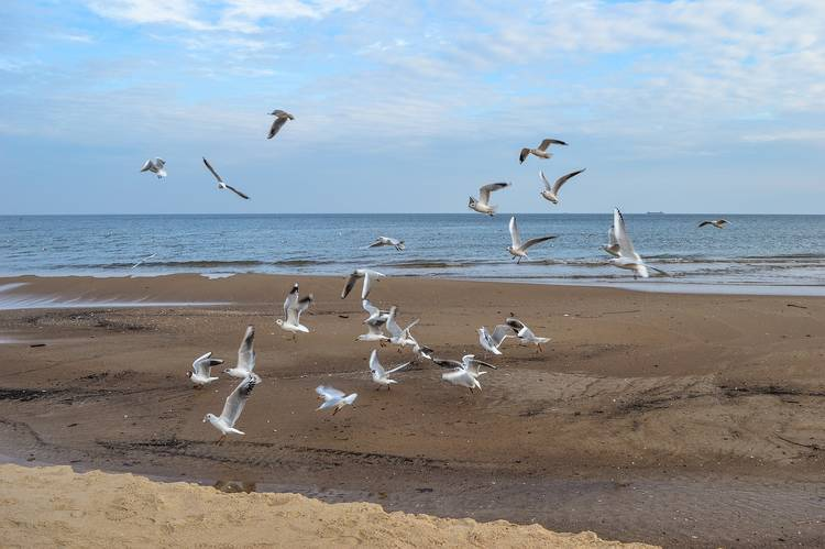 Seagulls on sandy beach - Poems by John Grey