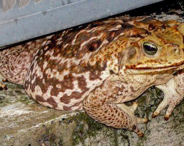 Toad crawling under door