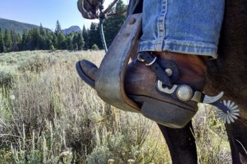 cowboy on horse in field
