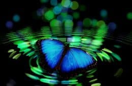 butterfly on pond with wave ripples