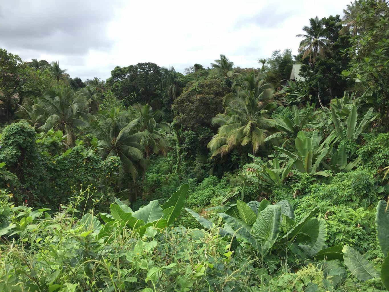 Empty jungle-like lot behind hotel in Suva - Homage to Fiji