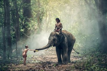 young boy caressing an elephant's trunk