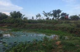 Creek in Tapon, Cambodia.