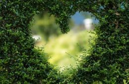 Heart-shaped hole in green bush - Big Love