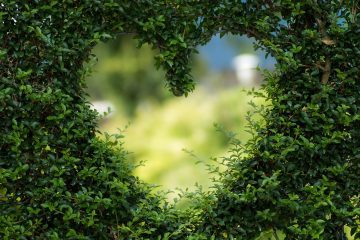 Heart-shaped hole in green bush - Big Love