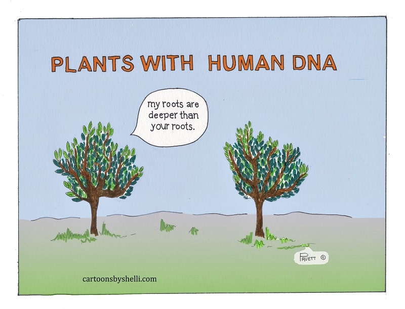 One plant telling another that their roots are deeper - Plants with human DNA