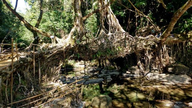 bridge made of tree roots