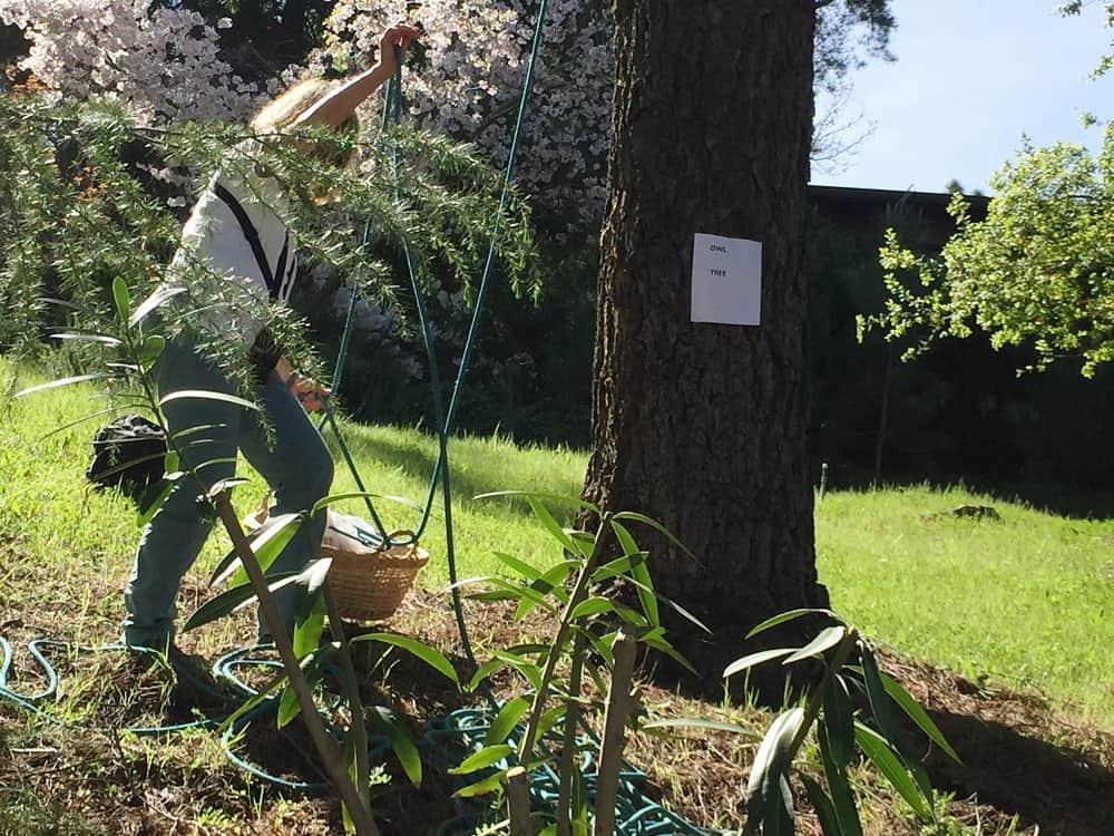 Sherrill sends basket up to John in tree - My owl adventure