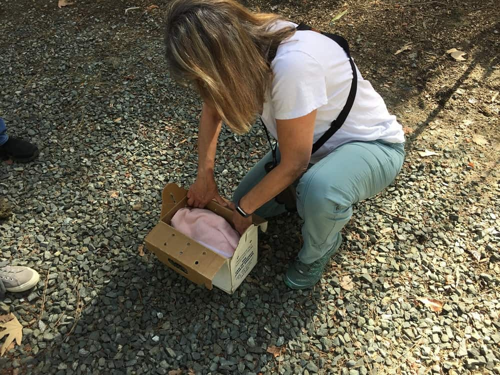 Sherrill covering box with two owls inside - My owl adventure