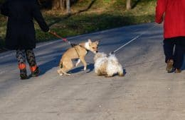 Two people each walking their dogs side by side - No chemicals required