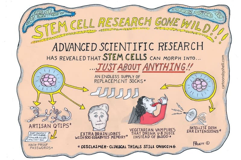 Satirical cartoon about what stem cells can morph into - Stem cell research gone wild!!!