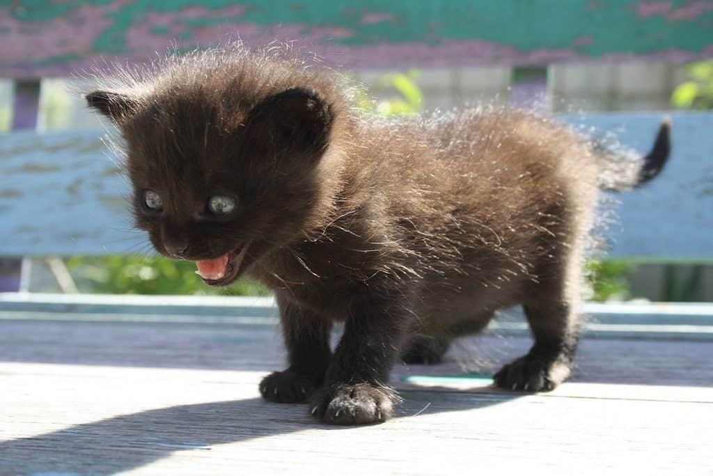 kitten spitting