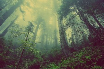 Trees in woods covered in mist - Can't see the forest for the trees