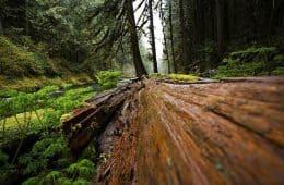 Fallen tree in woods - Poems by John Grey