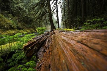 Fallen tree in woods - Poems by John Grey